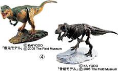 復元モデル&骨格モデル